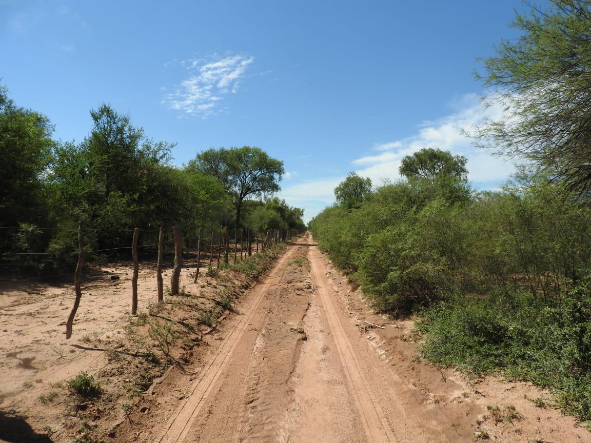 bosque nativo cba